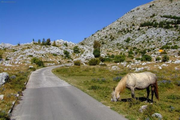 Izlet Planina Biokovo (Park prirode)